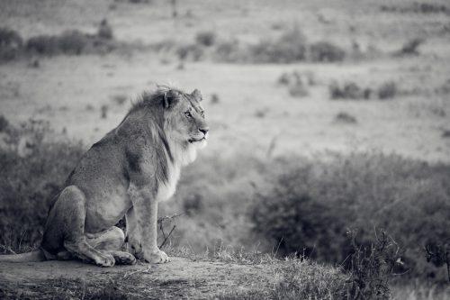 ID 2160 – Le Roi attend