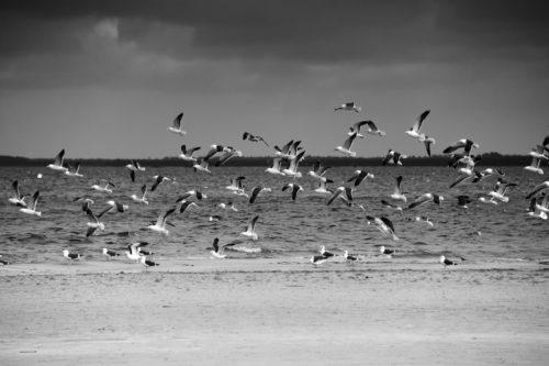 ID D17 2225 – Seagulls