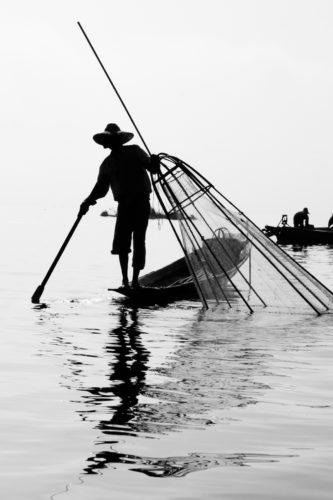 ID D17 2333 – Pecheur Birman