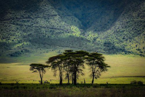 ID D17 2403 – Tanzanie-green land