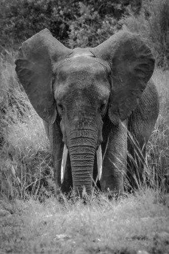 ID D17 2404 – Tanzanie-eléphant
