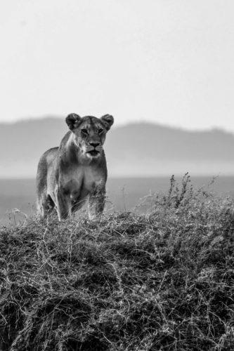 ID D17 2411 – Tanzanie-territoire sauvage