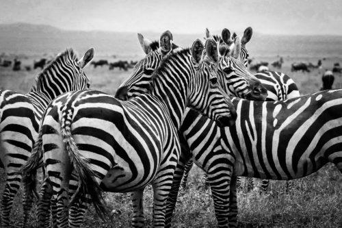 ID D17 2415 – Tanzanie-jeu de lignes