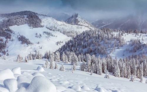 ID D17 2501 – Winter