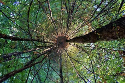 ID D17 2519 – Ballade en forêt