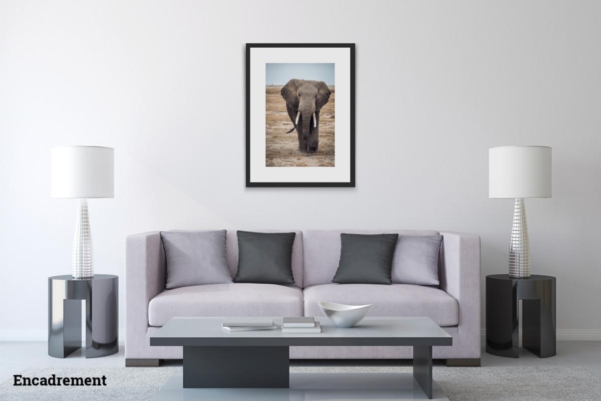 Damien Bapst ID 2159 – L'Éléphant vexé
