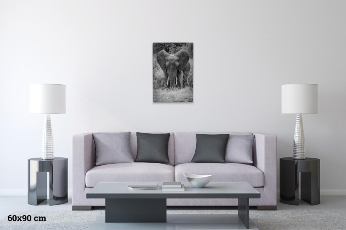 Virginie Cressot ID D17 2404 – Tanzanie-eléphant