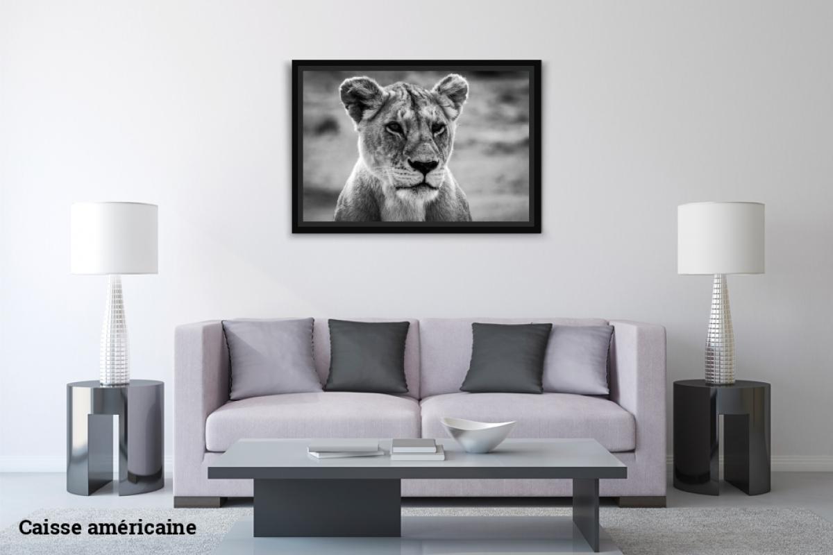 Virginie Cressot ID D17 2408 – Tanzanie-lionne