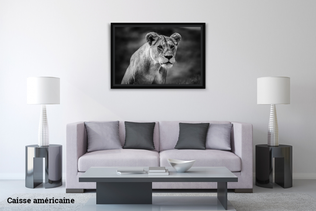 Virginie Cressot ID D17 2409 – Tanzanie-lionne II