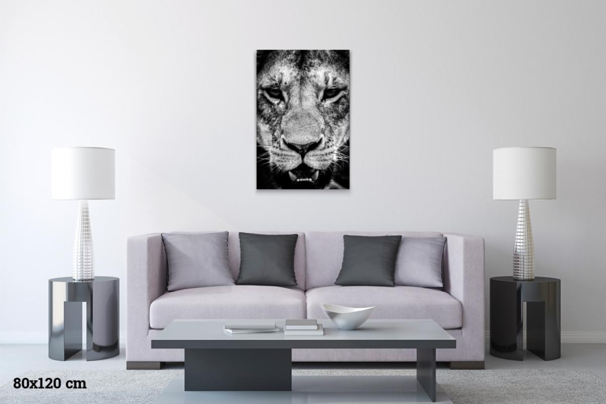 Virginie Cressot ID D17 2410 – Tanzanie-regard de lionne