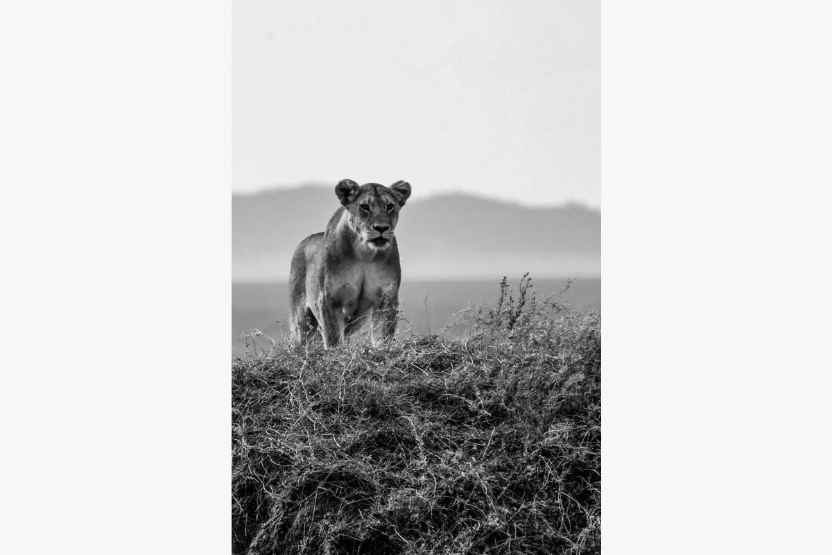 Virginie Cressot ID D17 2411 – Tanzanie-territoire sauvage