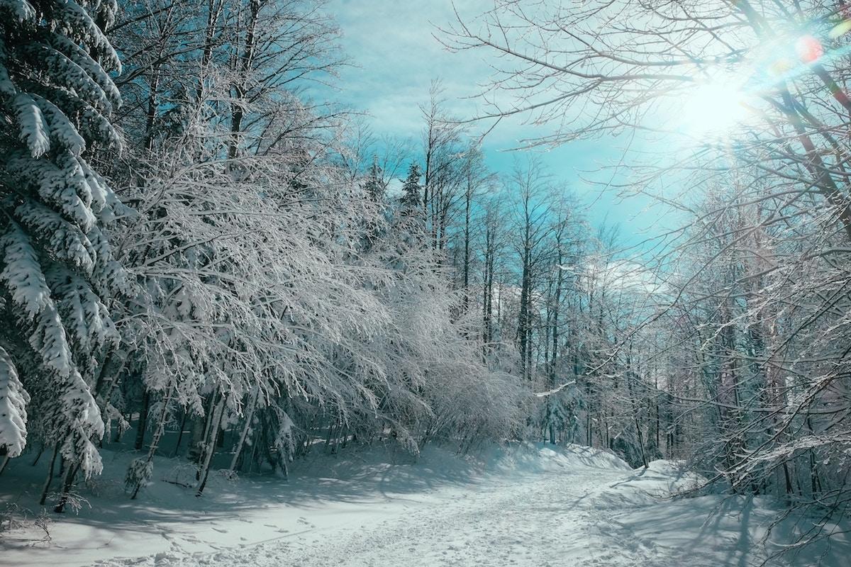 Delight ID D17 2499 – Winter in Platak